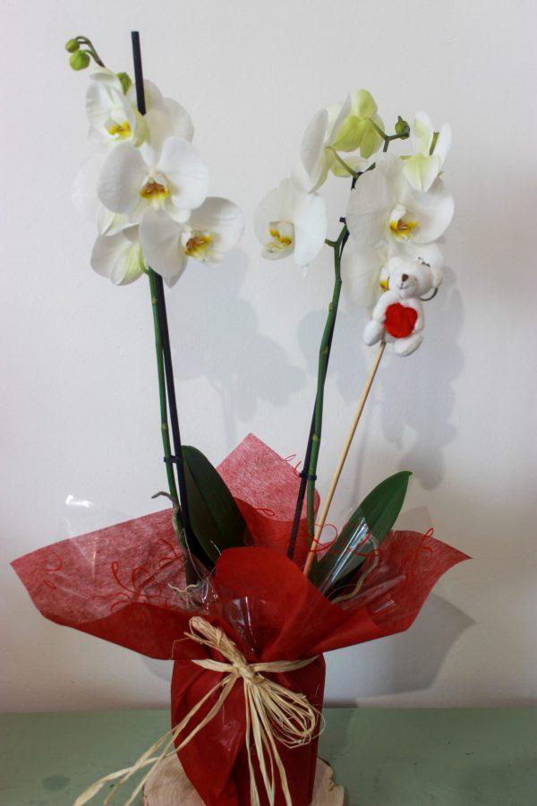 orquidea san valentin
